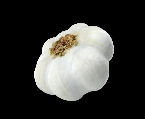 Garlic.H03.2k